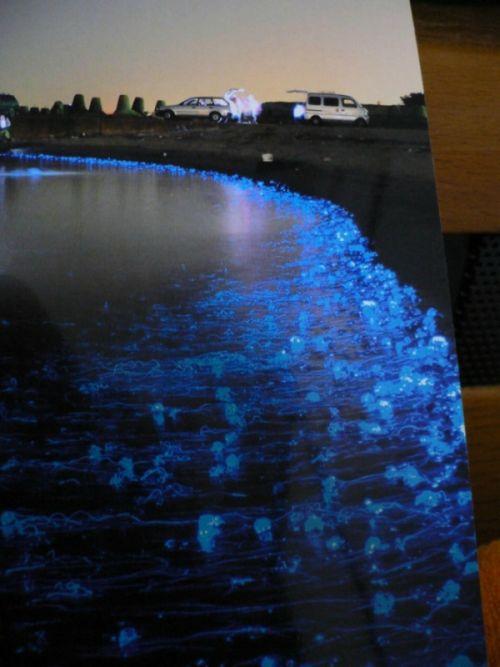 Glowing Jellyfish (5 pics)