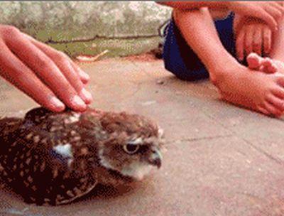 Owl (8 gifs)