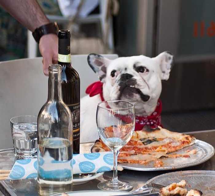 Dogs Eating Pizza (20 pics)