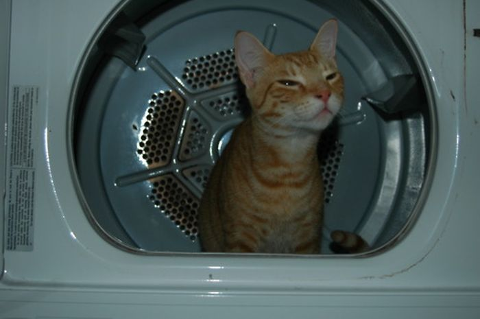 Cats Where They Do Not Belong (50 pics)