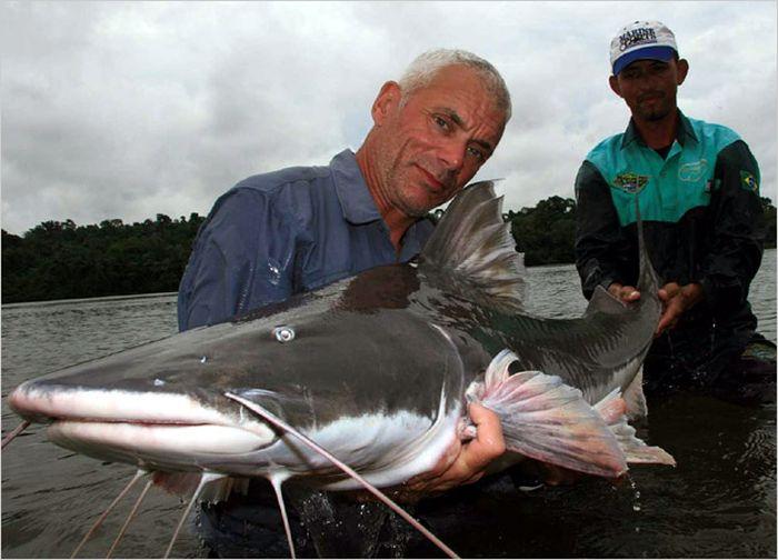 Killer Fish (111 pics)