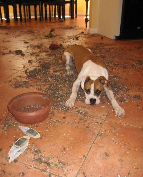 Pets Gone Wild (45 pics)