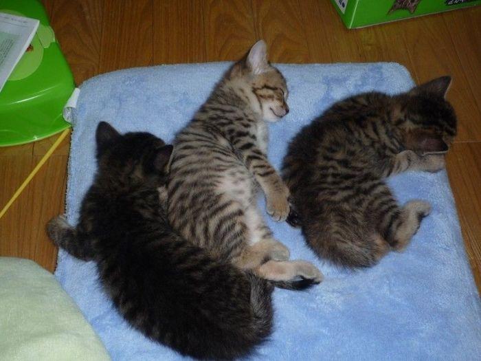 Kittens (100 pics)