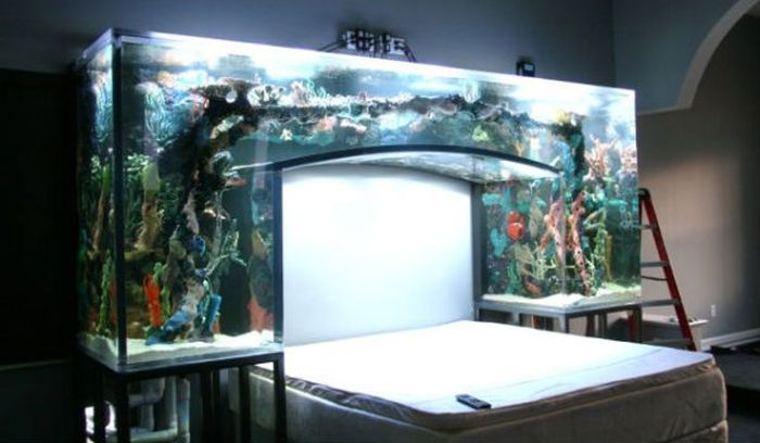 Fish Tanks of Celebrities (16 pics)