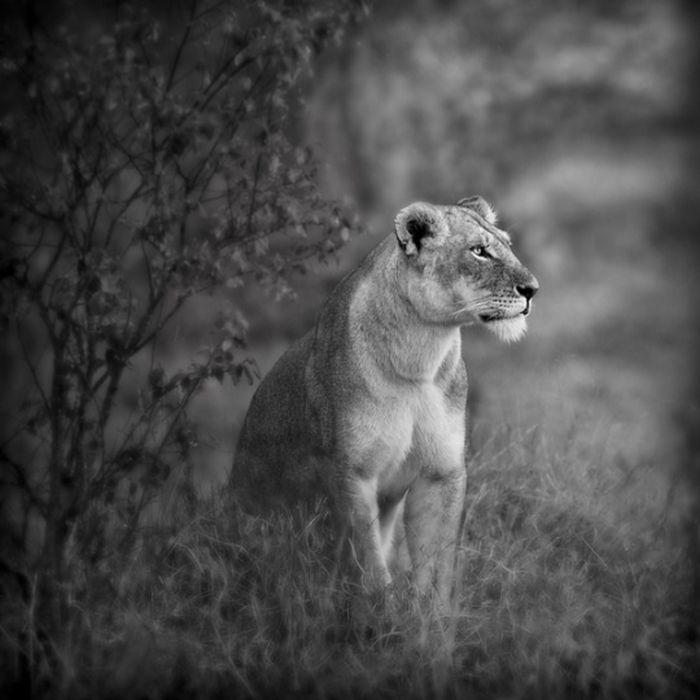 Black and White Animal Photography (50 pics)