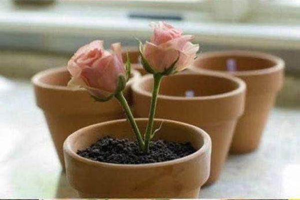 Potted Plant Dessert (20 pics)