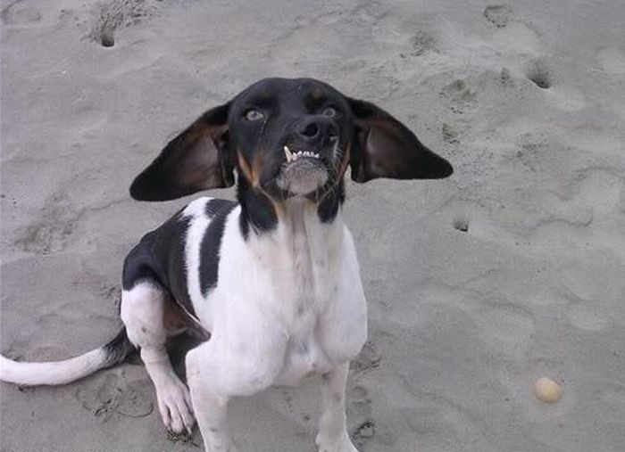 Hilarious Dog Faces (110 pics)