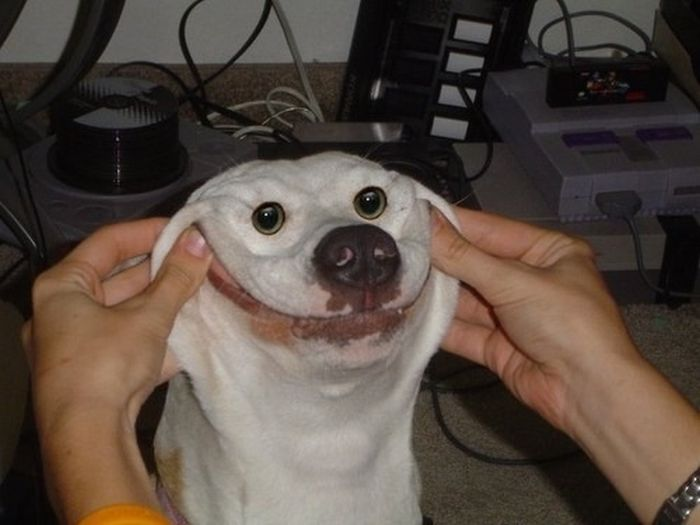 Hilarious Dog Faces (110 pics)