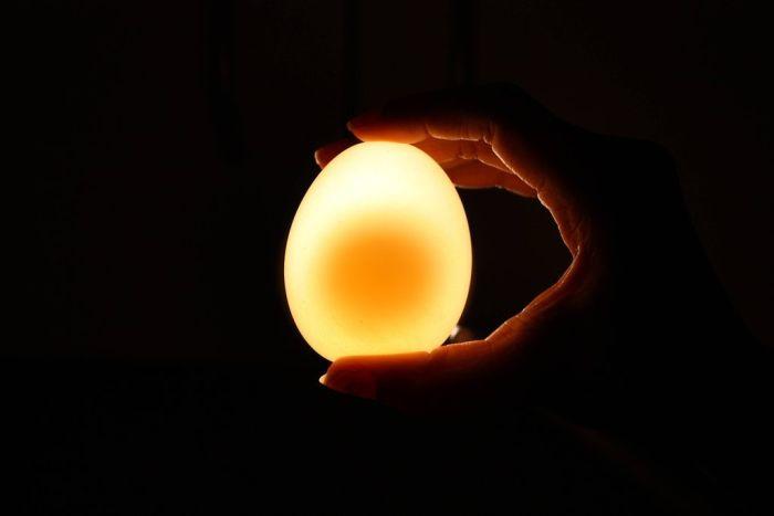 Naked Egg Experiment. Egg vs Vinegar (12 pics)
