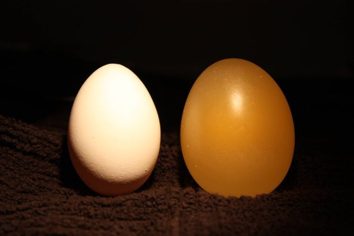 Naked Egg Experiment. Egg vs Vinegar (12 pics)