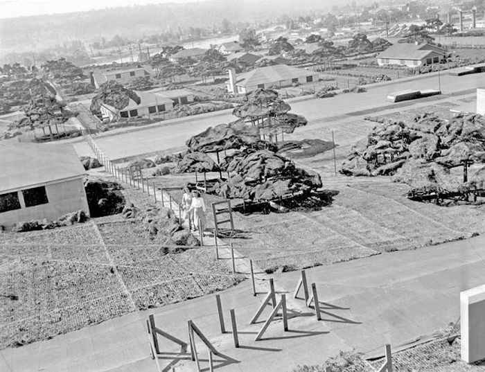 Hiding Air Bases, Factories and Plants in WWII (22 pics)