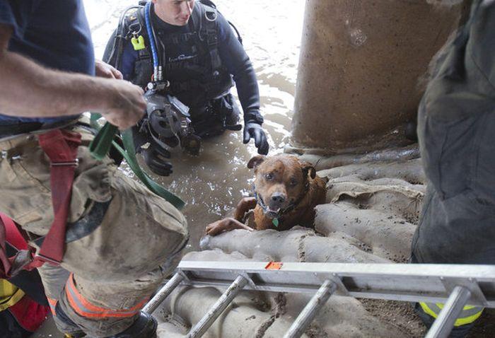 Rescuing a Dog  (20 pics)