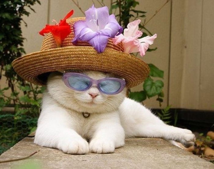The Most Relaxed Cat in the World Showing Spring Trends (26 pics)