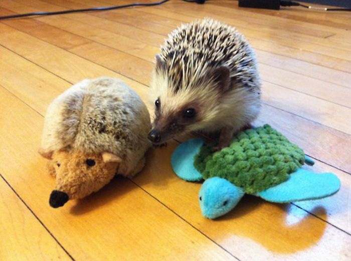 Animals With Stuffed Animals Of Themselves (33 pics)