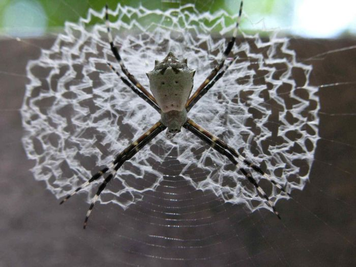 Beautiful Spider Webs (16 pics)