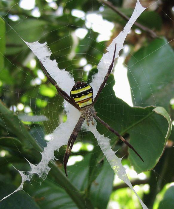 Beautiful Spider Webs (16 pics)