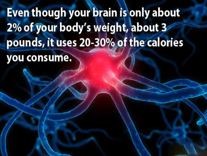 Facts About the Human Brain (18 pics)