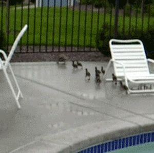 Swimming Lesson (4 gifs)