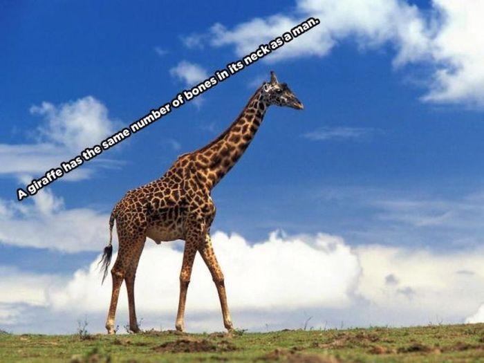 Interesting Animal Facts (10 pics)