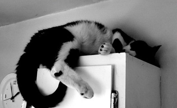 Sleeping Cats (35 pics)