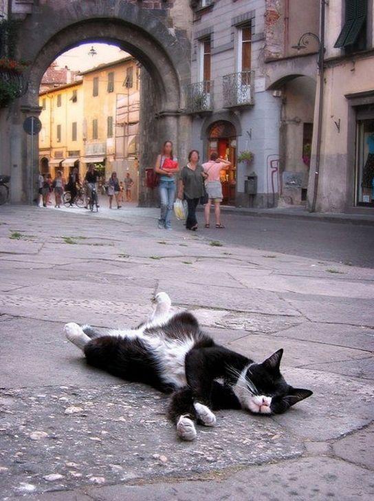 Sleeping Cats (35 pics)