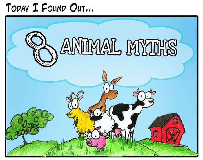 Animal Myths Dispelled (8 pics)