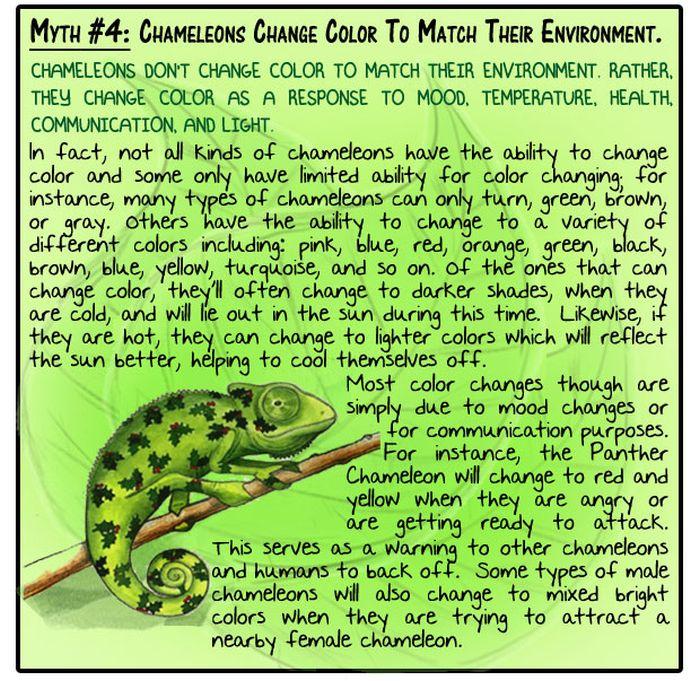 Animal Myths Dispelled (8 pics)