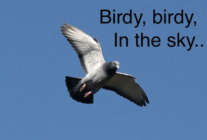 Birdy, Birdy, in the Sky (6 pics)