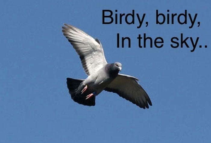 Birdy, Birdy, in the Sky (6 pics)