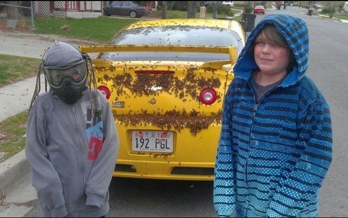 Chevrolet Cobalt SS Under Attack (6 pics)