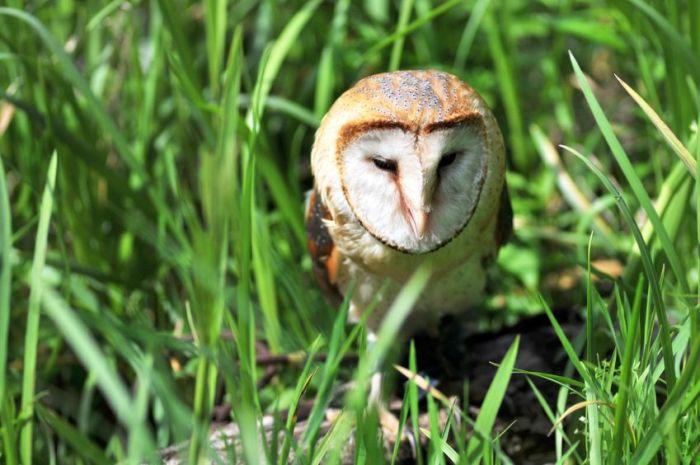 Hungover Owls (106 pics)