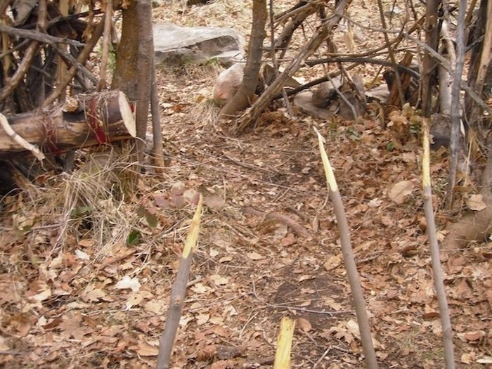 Two Idiots Arrested For Putting Traps In Provo Canyon Park (14 pics)