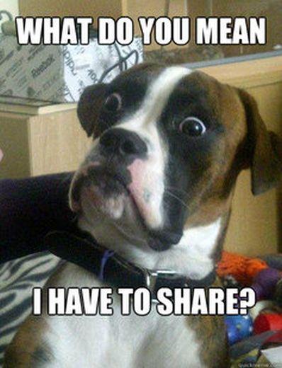 Baffled Boxer (53 pics)