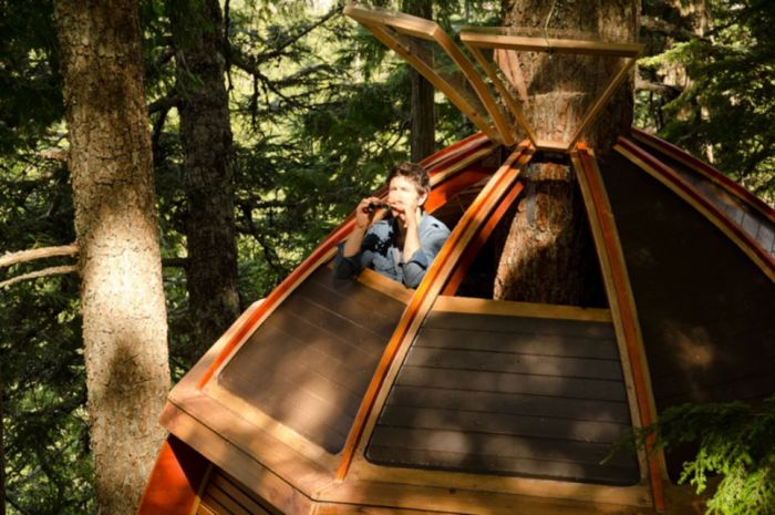 Squatter Tree House in Canada (13 pics)