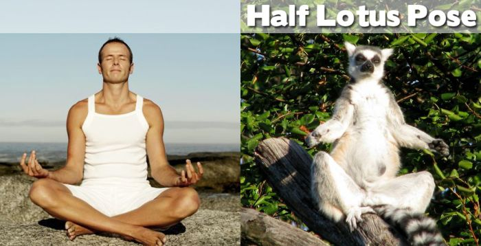 Yoga Positions Demonstrated By Animals (27 pics)