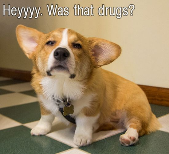 How To Give Your Dog Drugs (9 pics)