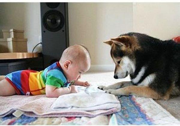 A True Friend (14 pics)