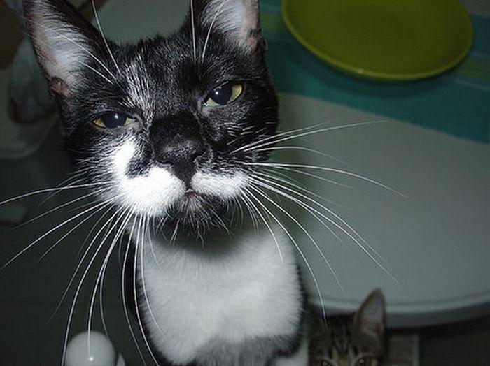 Hangover Cats (49 pics)