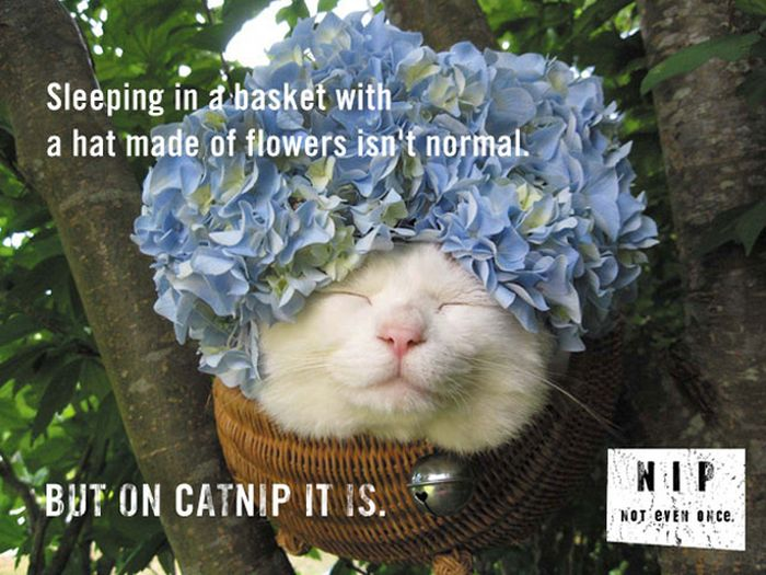 It's Not Normal. But on Catnip It Is (20 pics)
