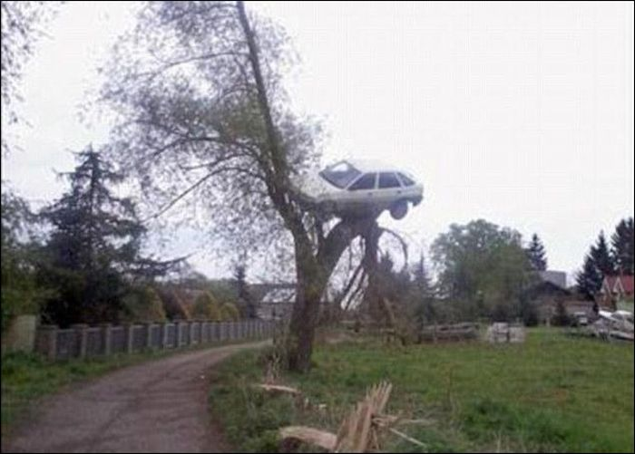 Car on the Top of a Tree (2 pics)
