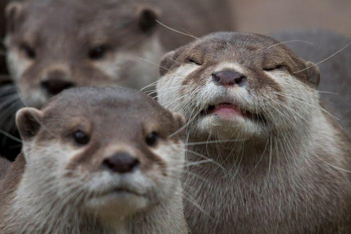 Animal Photobombers (35 pics)