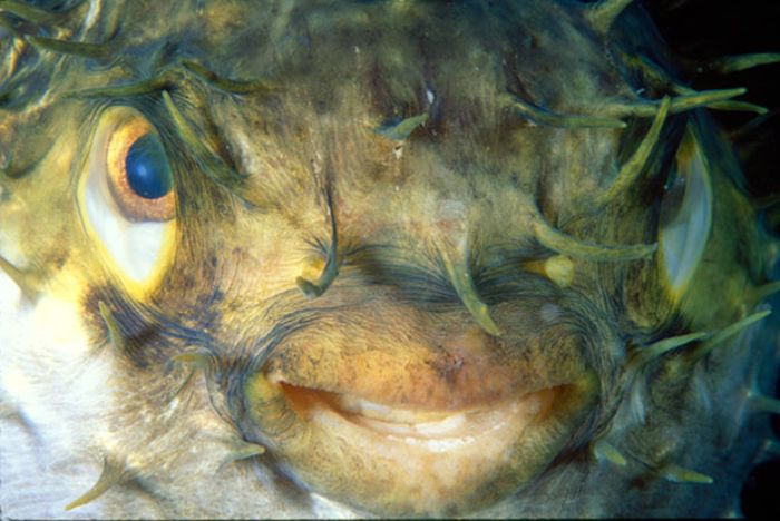 Faces of the Sea (20 pics)