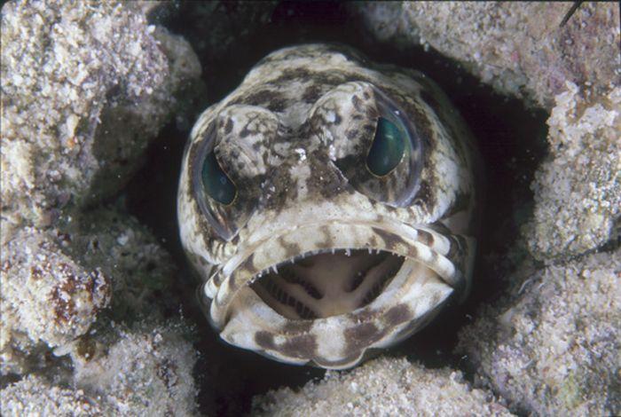 Faces of the Sea (20 pics)