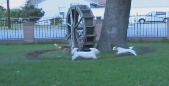 Funny Dogs Running Around in Circles