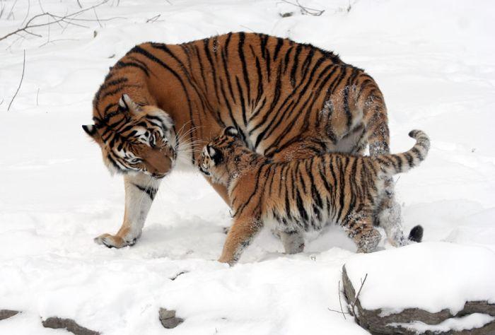 Adorable Animal Mom and Baby Photos (40 pics)