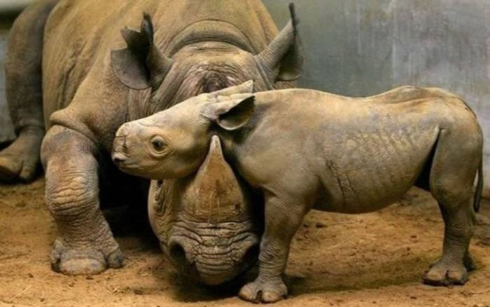 Adorable Animal Mom and Baby Photos (40 pics)