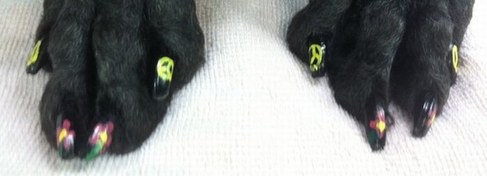 Dog Nail Art (27 pics)