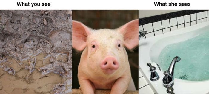 What You See Vs. What Animals See (11 pics)