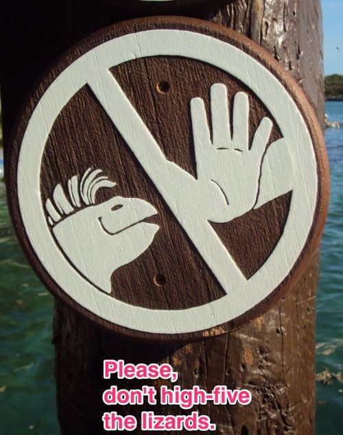 WTF Signs (31 pics)