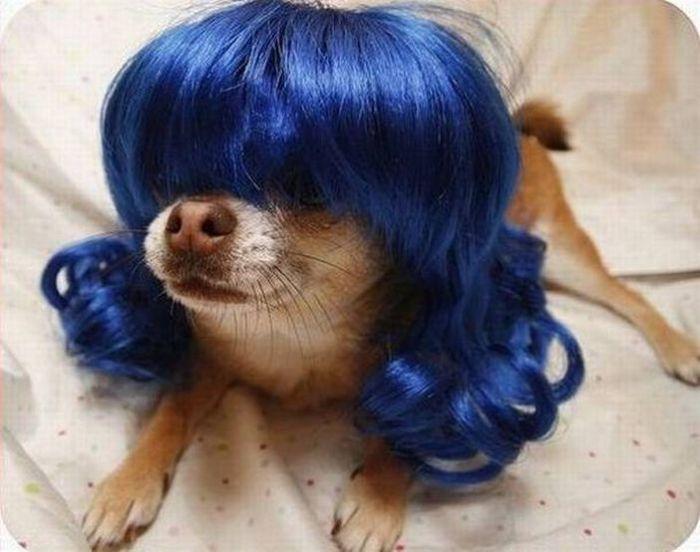 Animal Wigs (29 pics)